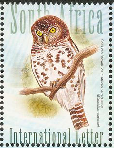 African Barred Owlet stamps - mainly images - gallery format