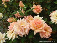 -- www.sceneoutside.co.nz - aboutgardendesign.com