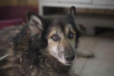 """Un cagnolino abbandonato dell'""""Associazione Difesa Animali""""."""