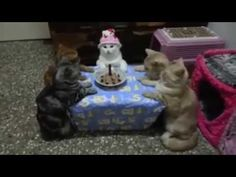 Cats Anniversaire Amazing See Must