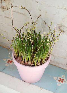 Beautiful pot of Spring