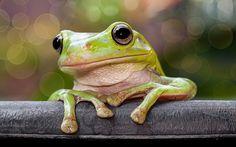 自宅の庭で撮影されたポーズが可愛いカエル達の写真
