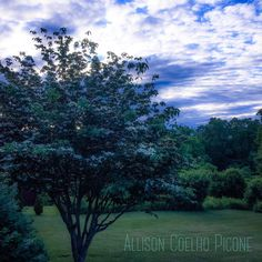 See this Instagram photo by @allison_picone_photos • 7 likes