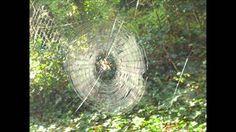 dikke spin uit Li-La-Liedjesboek van Zwijsen met foto's