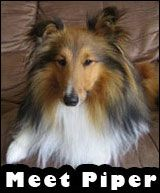 Sheltie Planet: The Complete Pet Owner's Guide to Shetland Sheepdogs