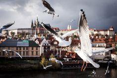 W czeszkach po Pradze