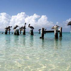 Playa los Roques, Venezuela - @instagallerys- #webstagram