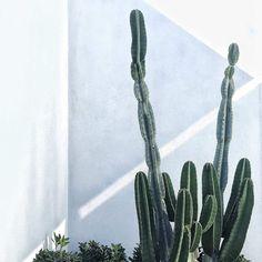 T.D.C | Landscape Design by Monica Palmer of Slightly Garden Obsessed