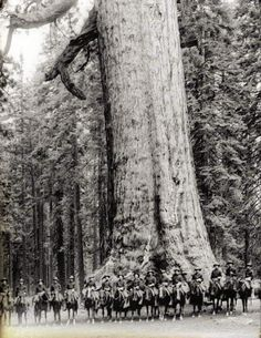 """Sixteen mounted soldiers of F Troop standing in front of """"Grizzley Giant"""", a Big Tree in Mariposa Grove in Yosemite National Park, California, ca.1900"""