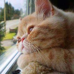 Cats,cats,cats, EVERYWHERE!....MeOwww... – Społeczność – Google+
