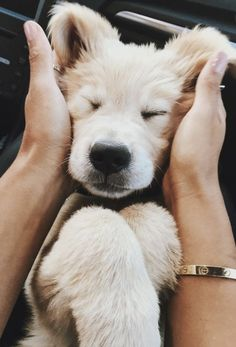 Pinterest photo - Cute Dogs And Puppies, I Love Dogs, Puppy Love, Animals And Pets, Baby Animals, Cute Animals, Animal Babies, Cuddle Buddy, Retriever Puppy