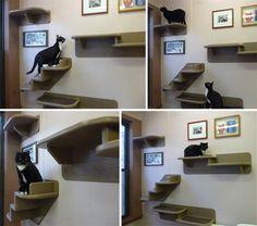 wall cats!