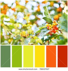 Hawthorn berries and palette of colors. Colour swatches.