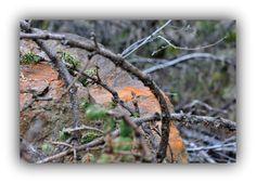 lichene arancione q 02.05.15 DSC_0266