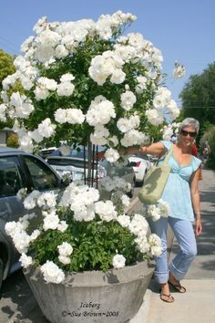 Lali posing with a fabulous Iceberg tree rose at a Santa Rosa, CA. Beautiful Gardens, Beautiful Flowers, Patio Trees, Rose Trees, Moon Garden, White Gardens, Flower Planters, Plantar, Balcony Garden