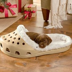 How cute is this pet bed?that is so cute.