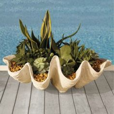 Seashell Outdoor Planter - tropical - outdoor planters - - by Grandin Road