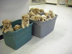Containers full of puppies!