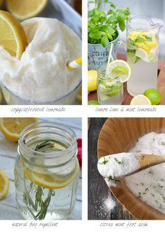 Lemon Lime Ideas