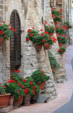 Flowers of Assissi Indoor/Outdoor Gallery-Wrapped Canvas