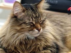 What Your Cat Slowly Blinking Says About You