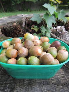 greenish acorns in green container