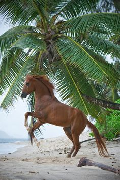 #horses   on the beach