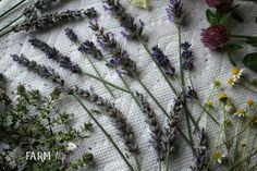 10 useful & pretty things to make with lavender from your garden, local farmer's market, or a lavender farm: lavender salve, soap, face cream & more! Lavender Crafts, Lavender Ideas, How To Dry Rosemary, Cool Rugs, Nerdy, Herbalism, Diy And Crafts, Pretty, How To Make