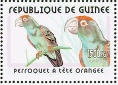 Red-fronted Parrot stamps - mainly images - gallery format