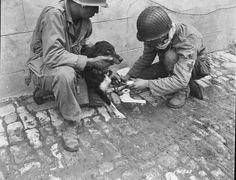 A pair of 1st Army medics working on an injured French dog they had found amid the ruins of Carentan, France on July 1, 1944. Normandy Campaign (via)