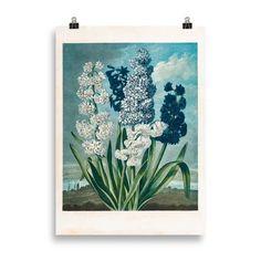 Lámina Botánica Jacintos | Cosa Bonita | Láminas para cuadros Flora Garden, Engraving Printing, Stippling, Heritage Image, Hand Coloring, Temple, Photo Gifts, Framed Prints, Tapestry