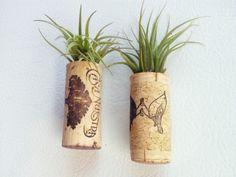 Ideen originell kreativ super cool grüne Sukkulenten Küche dekorieren