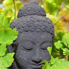 What we think, we become. -Buddha . . . . . . #gardensupplyco #shoplocal #garden #gardener #plant #flowers #winter #carync #raleigh #nc #nursery #visitnc #flowerstagram #grow #plants #nature #landscape #outdoors
