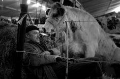 Houtem Jaarmarkt, annual winter fair and livestock market at Sint-Lievens-Houtem (2010) UNESCO 世界遺産