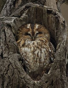 Everytime I see a hole in a tree I am going to look for an owl enjoying her little house she fits in so nicely:)...