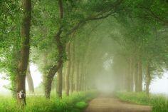 Photo Into the Mist par Lars van de Goor on 500px