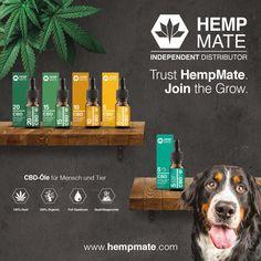 Independent Distributor, Cannabis, Hemp, Career, Make Money, Epilepsy, Swiss Guard, Business, Ganja
