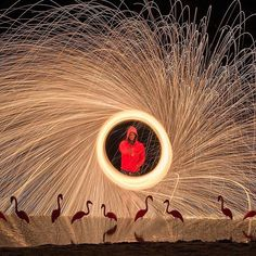Flamingos and Fireman @richlamphoto #vancouverphotographer #vancouverphotography #nickdidlickphotography #visualmediaproducer #nikoncanada #nikonlove #nikondf #cescolorado