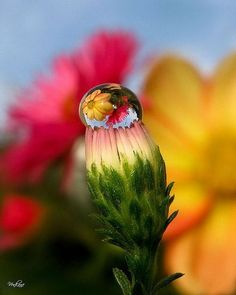 Just Awesome Morning Dew #flowers,
