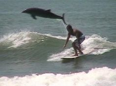 jumping dolphin and surfer
