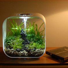 biorb 4 gallon fish tank | Biorb Fish Tanks > Biorb Life 30 > Biorb Life 30 White