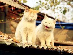 Happy cat and his sad wife