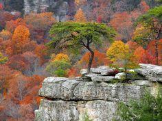 Overlook Landscape Tennessee Creek Resort Roost Fall State Park Fields Buzzards Millikans Flower Wallpaper