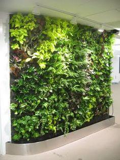 Beautiful Interior Design: Living Wall