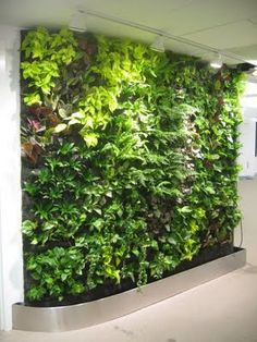 Diy Living Wall living wall garden – creating a living wall of plants for indoors