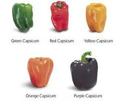 capsicum - Google Search