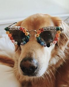 """Determine more information on """"golden retriever pup"""". Animals And Pets, Baby Animals, Funny Animals, Cute Animals, Cute Puppies, Cute Dogs, Dogs And Puppies, Doggies, Chihuahua Dogs"""