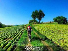 @Regrann from @volgoemiliaromagna -  Rimini (Rn)  Foto di @vispride  #emiliaromagna #rimini #italia #italy #volgorimini #volgoemiliaromagna #volgoitalia #turism #holiday #trip #travel #instatravel #travelgram #turismo #italyturism #italytravel #italytrip #italytour #travelingram #madeinitaly  #volgosocial #iloveitaly #Regrann  Grazie di cuore @volgoemiliaromagna per avere condiviso il mio scatto thankssssss by vispride