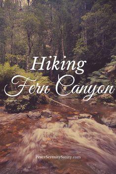 21 best groupon bite of seattle fun images on pinterest seattle hiking fern canyon publicscrutiny Choice Image