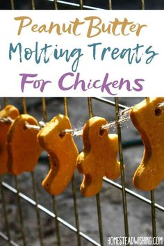 Chicken Garden, Chicken Life, Backyard Chicken Coops, Chicken Feed, Diy Chicken Coop, Raising Backyard Chickens, Keeping Chickens, Pet Chickens, Food For Chickens